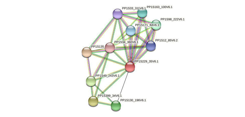PP1S229_35V6.1 protein (Physcomitrella patens) - STRING interaction network