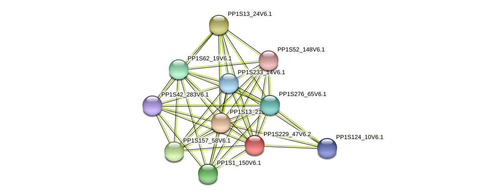 PP1S229_47V6.2 protein (Physcomitrella patens) - STRING interaction network