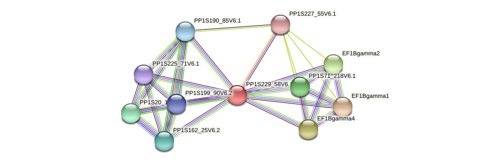 PP1S229_58V6.1 protein (Physcomitrella patens) - STRING interaction network