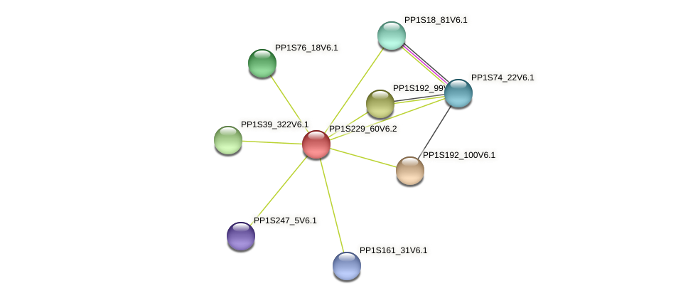 PP1S229_60V6.1 protein (Physcomitrella patens) - STRING interaction network
