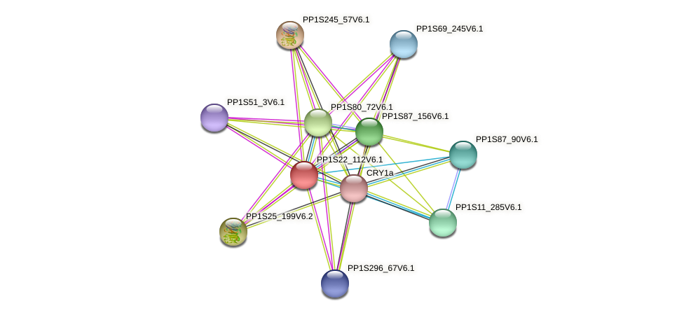 PP1S22_112V6.1 protein (Physcomitrella patens) - STRING interaction network