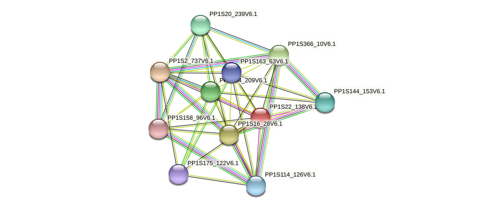 PP1S22_138V6.1 protein (Physcomitrella patens) - STRING interaction network