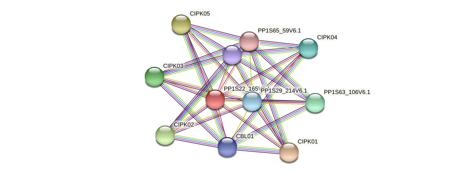 PP1S22_165V6.1 protein (Physcomitrella patens) - STRING interaction network