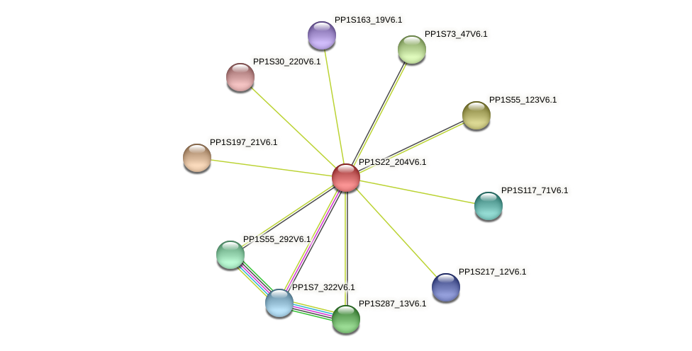PP1S22_204V6.1 protein (Physcomitrella patens) - STRING interaction network