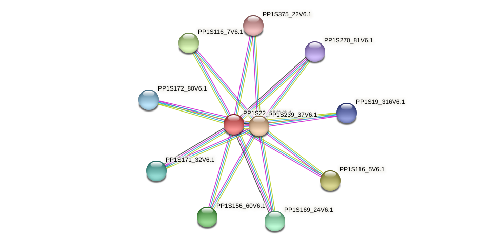 PP1S22_256V6.1 protein (Physcomitrella patens) - STRING interaction network