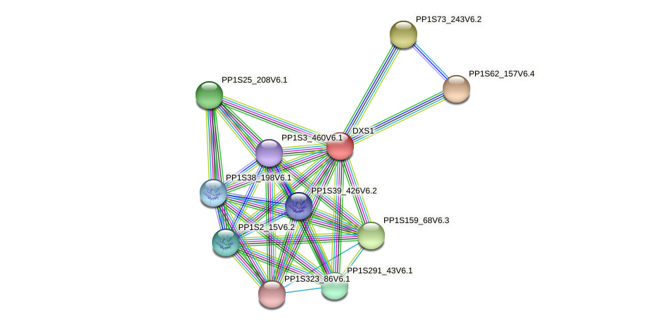 DXS1 protein (Physcomitrella patens) - STRING interaction network