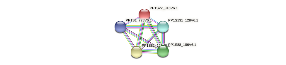 PP1S22_316V6.1 protein (Physcomitrella patens) - STRING interaction network