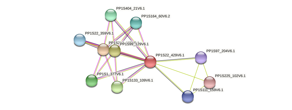 PP1S22_429V6.1 protein (Physcomitrella patens) - STRING interaction network