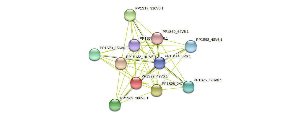 PP1S22_49V6.1 protein (Physcomitrella patens) - STRING interaction network