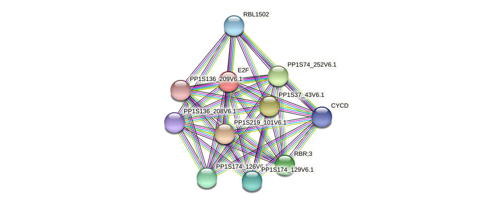 E2F protein (Physcomitrella patens) - STRING interaction network