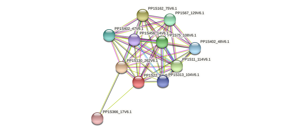 PP1S22_81V6.1 protein (Physcomitrella patens) - STRING interaction network