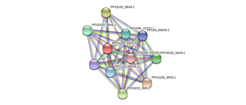 PP1S230_33V6.1 protein (Physcomitrella patens) - STRING interaction network