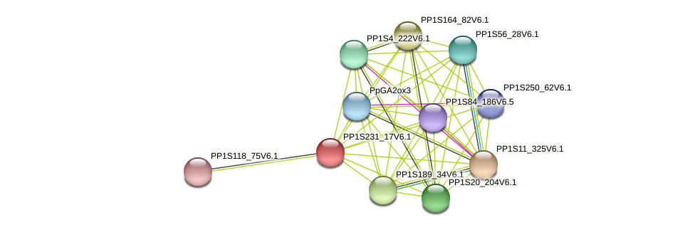 PP1S231_17V6.1 protein (Physcomitrella patens) - STRING interaction network
