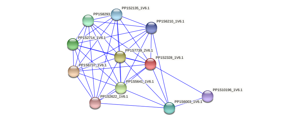 PP1S2328_1V6.1 protein (Physcomitrella patens) - STRING interaction network