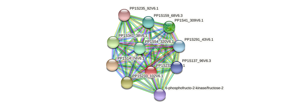 PP1S232_60V6.1 protein (Physcomitrella patens) - STRING interaction network