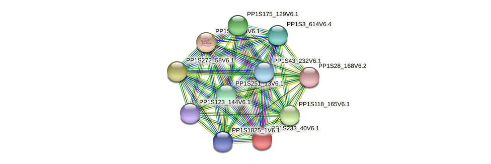 PP1S233_40V6.1 protein (Physcomitrella patens) - STRING interaction network