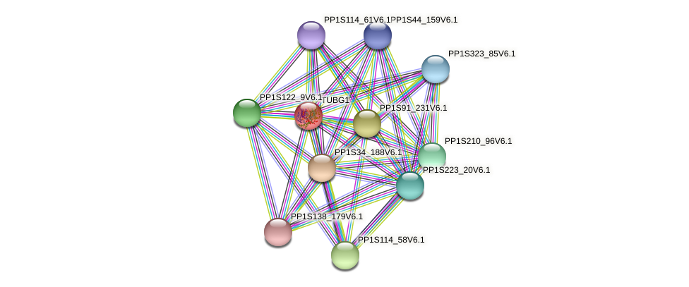 TUBG1 protein (Physcomitrella patens) - STRING interaction network