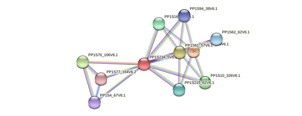 PP1S234_5V6.1 protein (Physcomitrella patens) - STRING interaction network