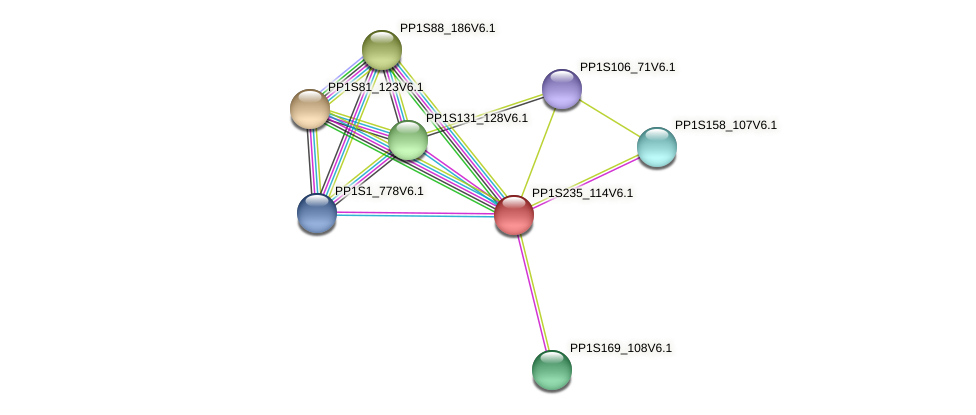 PP1S235_114V6.1 protein (Physcomitrella patens) - STRING interaction network