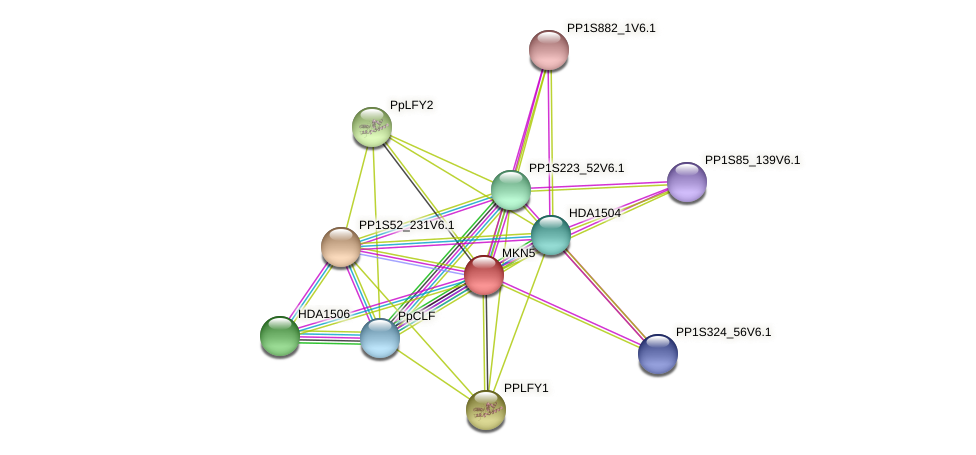 MKN5 protein (Physcomitrella patens) - STRING interaction network