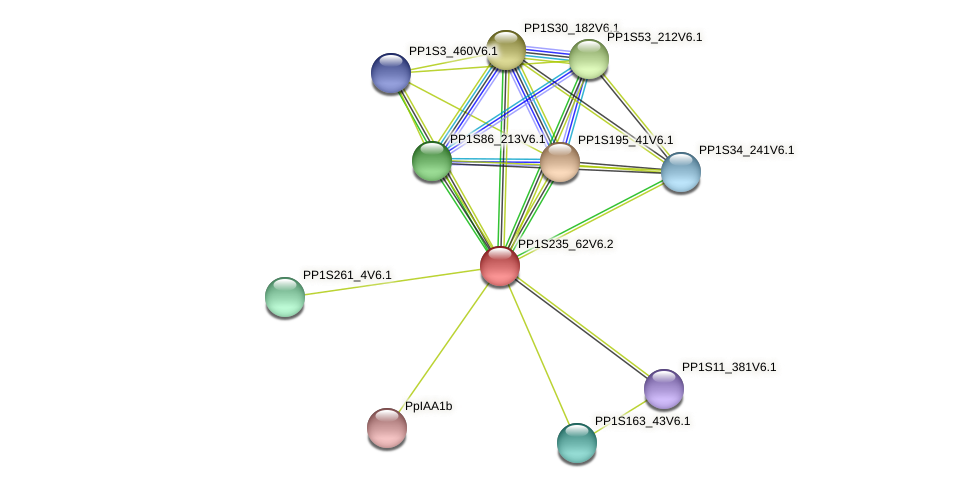 PP1S235_62V6.1 protein (Physcomitrella patens) - STRING interaction network