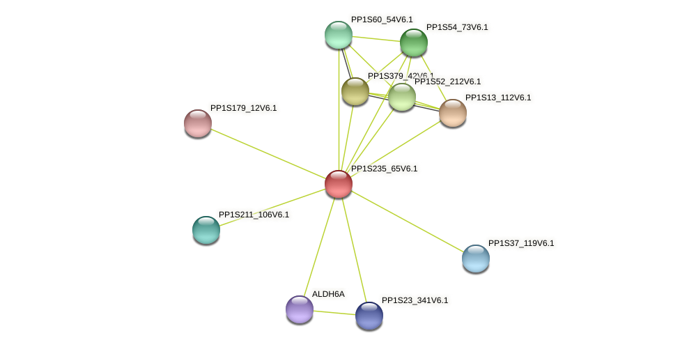 PP1S235_65V6.1 protein (Physcomitrella patens) - STRING interaction network