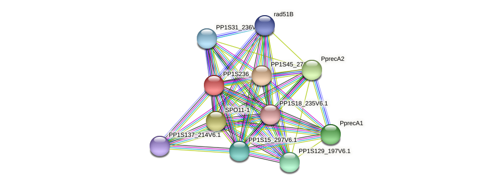 PP1S236_47V6.1 protein (Physcomitrella patens) - STRING interaction network