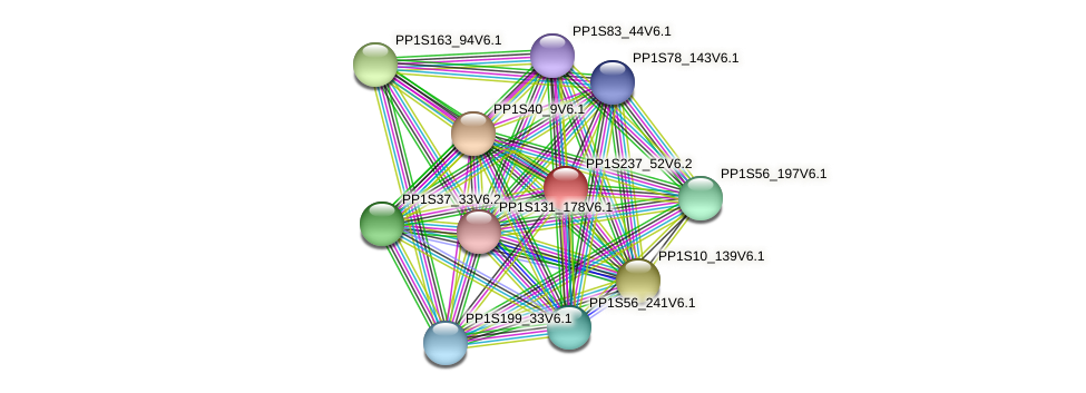 PP1S237_52V6.2 protein (Physcomitrella patens) - STRING interaction network