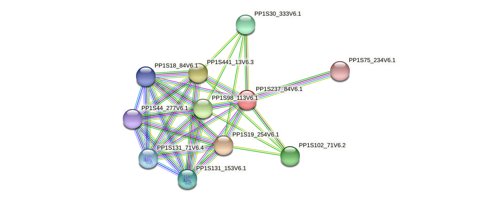 PP1S237_84V6.1 protein (Physcomitrella patens) - STRING interaction network