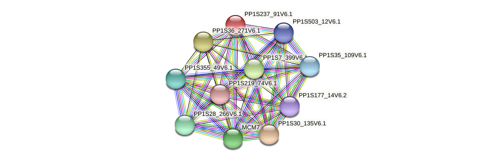 PP1S237_91V6.1 protein (Physcomitrella patens) - STRING interaction network