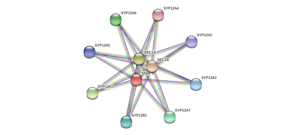 SNAP30 protein (Physcomitrella patens) - STRING interaction network