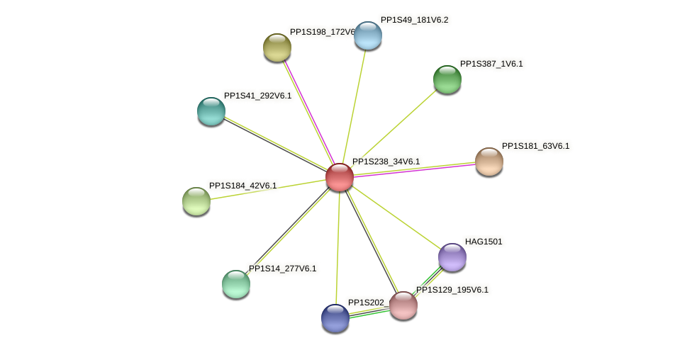 PP1S238_34V6.1 protein (Physcomitrella patens) - STRING interaction network