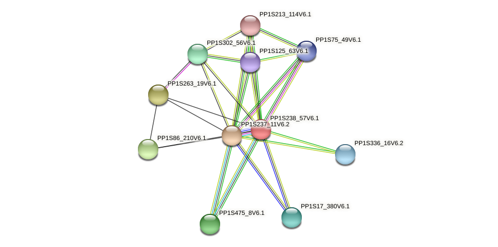 PP1S238_57V6.1 protein (Physcomitrella patens) - STRING interaction network