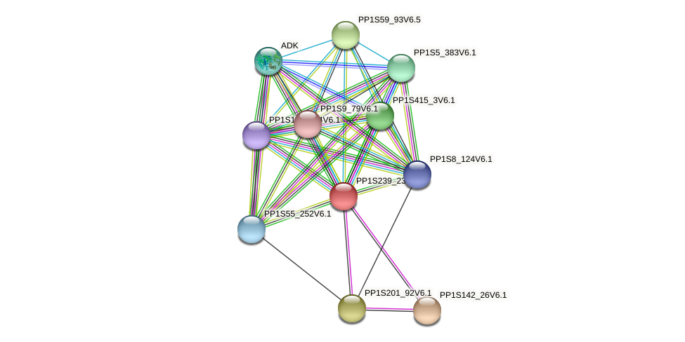 PP1S239_23V6.2 protein (Physcomitrella patens) - STRING interaction network
