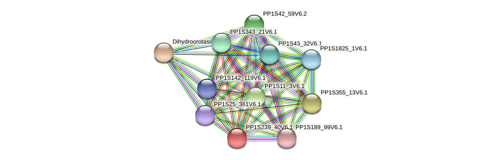 PP1S239_40V6.1 protein (Physcomitrella patens) - STRING interaction network