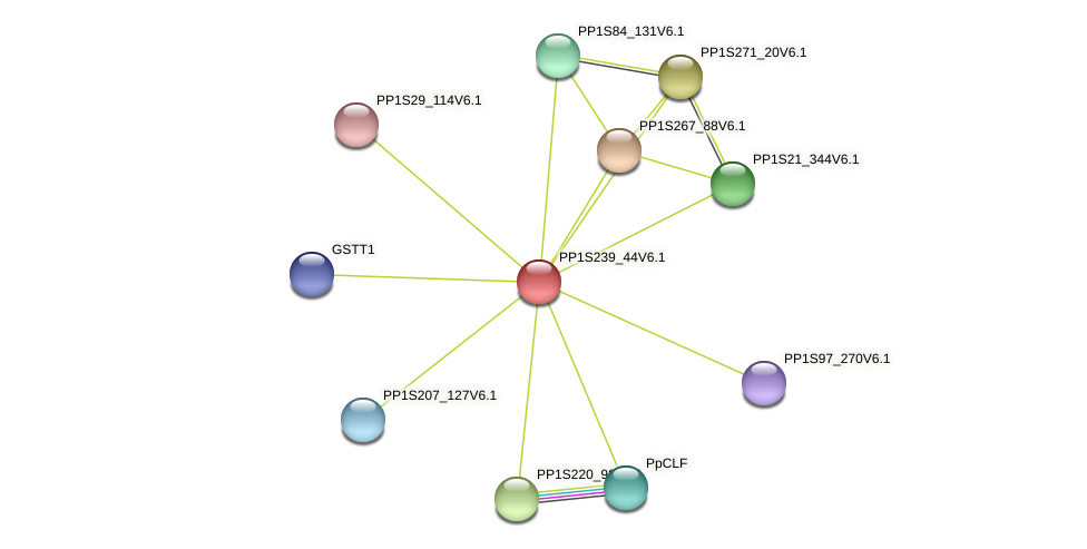 PP1S239_44V6.1 protein (Physcomitrella patens) - STRING interaction network