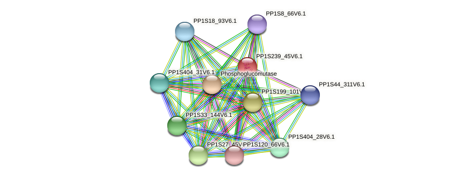 PP1S239_45V6.1 protein (Physcomitrella patens) - STRING interaction network