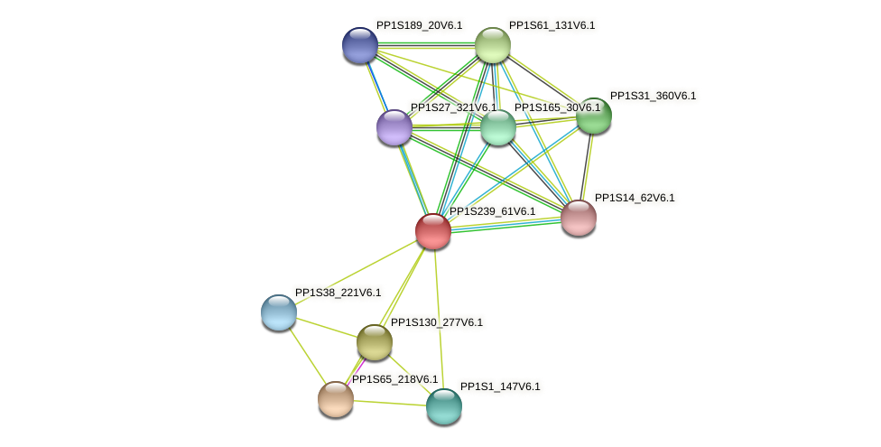 PP1S239_61V6.1 protein (Physcomitrella patens) - STRING interaction network
