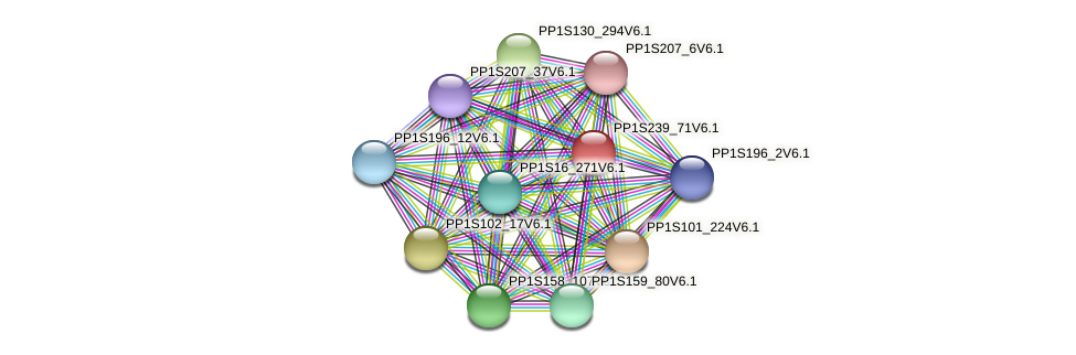 PP1S239_71V6.1 protein (Physcomitrella patens) - STRING interaction network