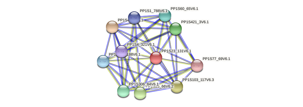 PP1S23_131V6.1 protein (Physcomitrella patens) - STRING interaction network
