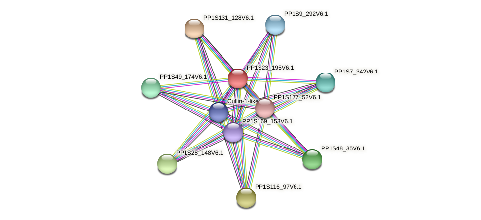 PP1S23_195V6.1 protein (Physcomitrella patens) - STRING interaction network