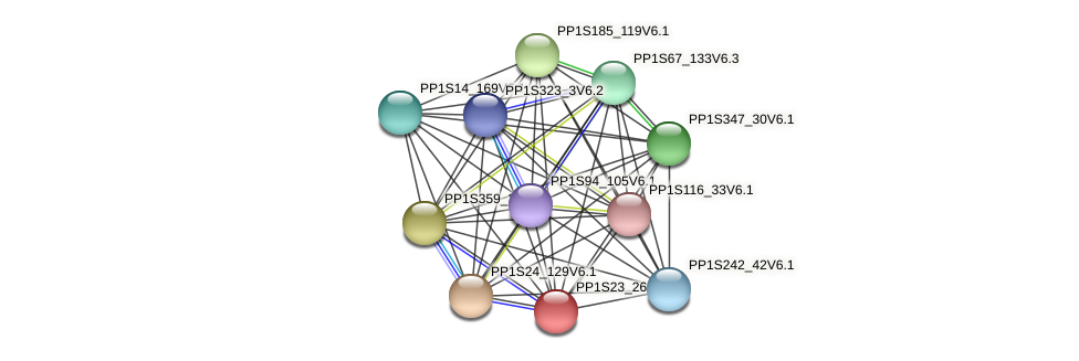 PP1S23_262V6.1 protein (Physcomitrella patens) - STRING interaction network