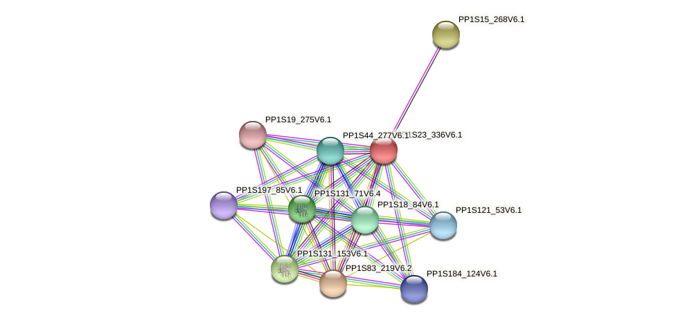 PP1S23_336V6.1 protein (Physcomitrella patens) - STRING interaction network