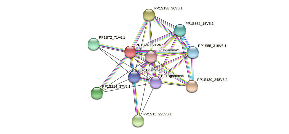 PP1S240_21V6.1 protein (Physcomitrella patens) - STRING interaction network