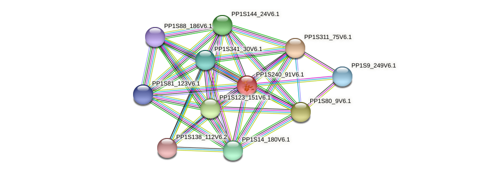 PP1S240_91V6.1 protein (Physcomitrella patens) - STRING interaction network