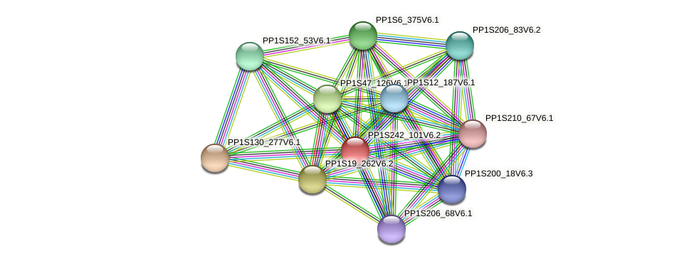 PP1S242_101V6.2 protein (Physcomitrella patens) - STRING interaction network