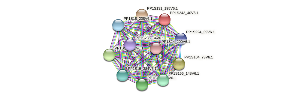 PP1S242_40V6.1 protein (Physcomitrella patens) - STRING interaction network