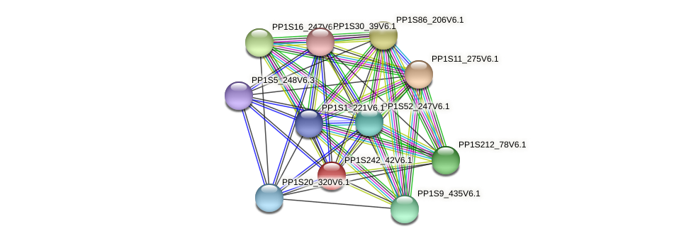 PP1S242_42V6.1 protein (Physcomitrella patens) - STRING interaction network