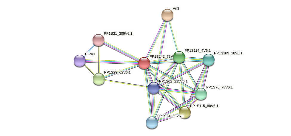 PP1S242_73V6.1 protein (Physcomitrella patens) - STRING interaction network