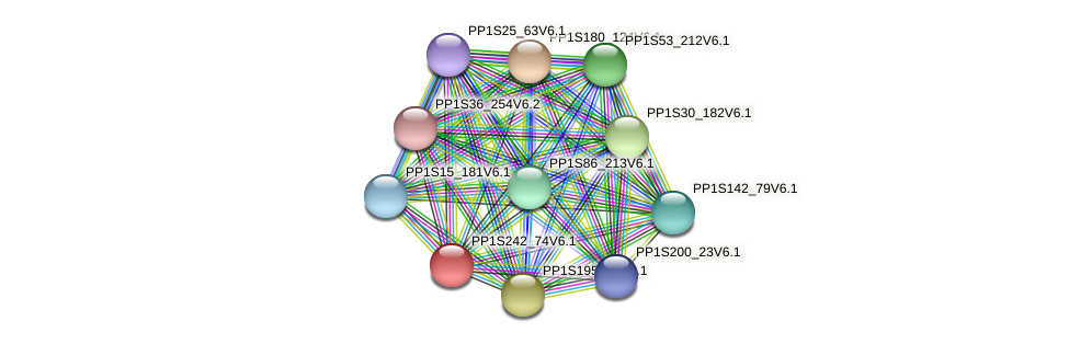 PP1S242_74V6.1 protein (Physcomitrella patens) - STRING interaction network
